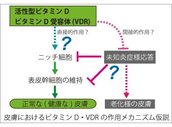 SkinVDR-model